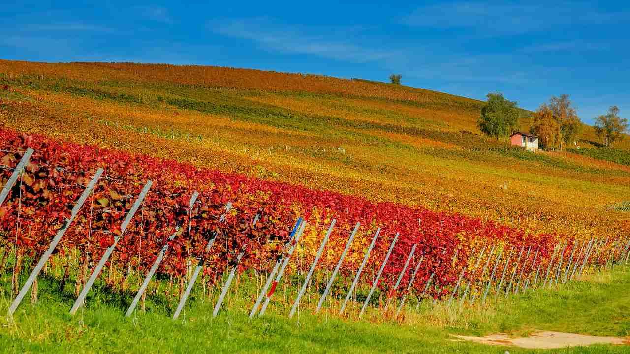 Natječaj za vinogradare
